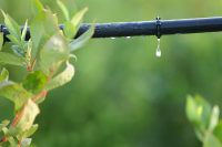 Irrigation Tips & Tricks